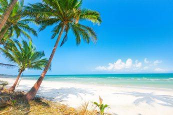 Wallpaper Palm Tree, Sand, Sea, Beach, The Sun, Palm Trees