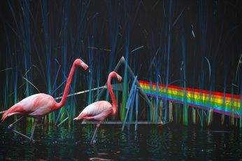Wallpaper Two Pink Flamingos, Pond, Pink Floyd, Dark Side