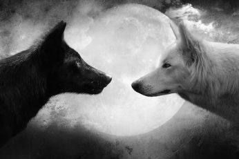 Wallpaper White And Black Wolf Digital Wallpaper, Moon