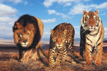 Wallpaper Wild Cats, Tiger, Lion, Big Cats, Leopard, Eyes
