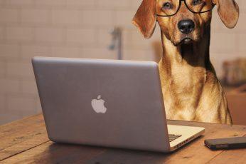 Wallpaper Brown Coated Dog In Front Of Macbook Pro, Laptop