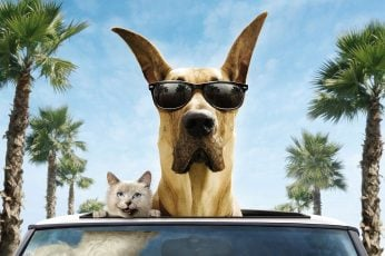 Wallpaper Cat And Dog Funny, Smile, Car, Sunglasses