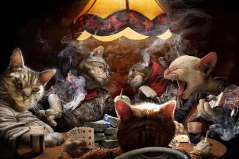 Wallpaper Cats Night Out, Poker, Animals, Game, Funny