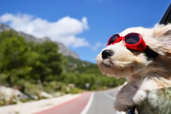 Wallpaper Dog, Funny, Cute, Travel, Wind, Happy, Animals