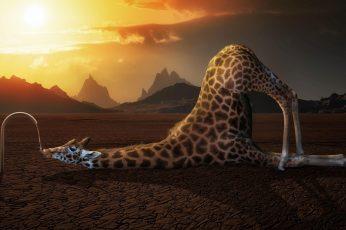Wallpaper Funny, Giraffe, Drink, Drinking 3840×2160 4k