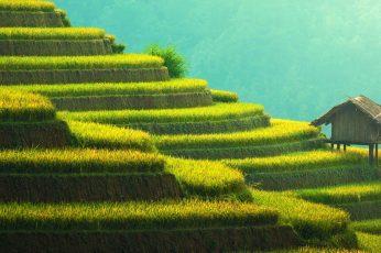 Wallpaper Rice Terraces Mountain Landscape
