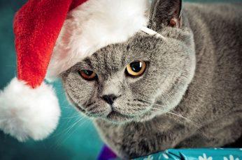 Wallpaper Santa Kitty, Funny Cat, Funny Kitty, Christmas