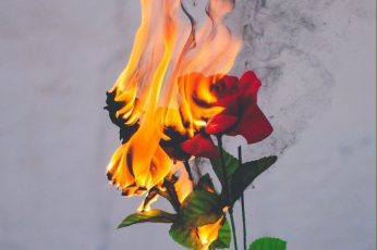 Aesthetic Burn Flower Wallpaper