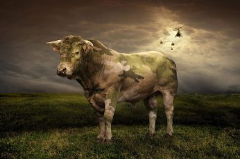 Wallpaper Camouflage Bull, Green, White And Black