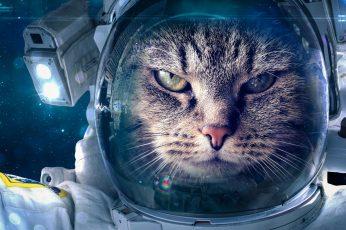 Wallpaper Cat, Funny, Space Suit, Astronaut