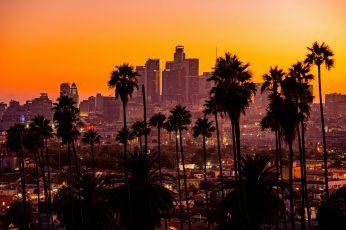 Wallpaper City, Sunset, California, Palm Trees, Los Angeles