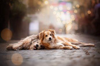 Wallpaper Dog, Animals, Mammal, One Animal, Domestic, Animal