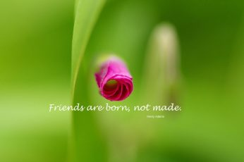 Wallpaper Flower, Flower Bud, Friend, Friendship, Quotes