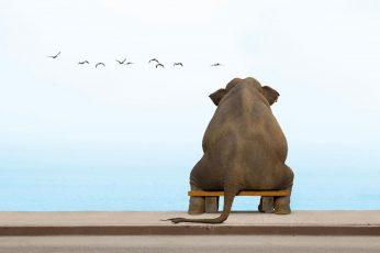 Wallpaper Funny, Animal, Elephant, Sitting, Birds, Sky