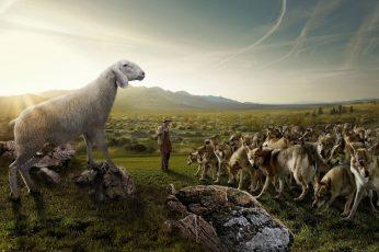Wallpaper Funny Sheep Wolves Entertainment Funny Hd Art