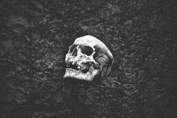 Wallpaper Human Skull, Black, White, Abstract