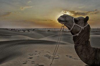 Wallpaper Jaisalmer, Sam Sand Dunes, Desert, Rajasthan