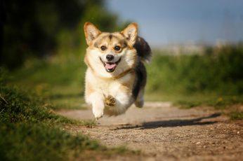 Wallpaper Joy, Mood, Jump, Dog, Track, Flight, Walk, Bokeh