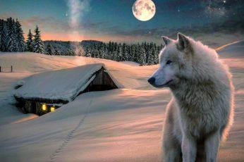 Wallpaper Nature Art Winter, Snow, Wolf, Moon, Sky, Nature