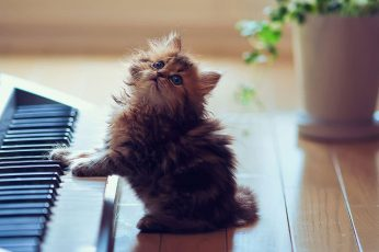 Wallpaper Piano, Cat, Kitty, Kitten, Cute, Music, Eyes