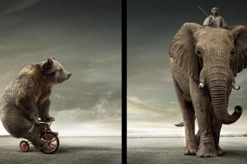 Wallpaper The Elephant The Crazy Bear, Bike, Bicycle