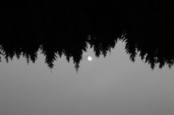 Wallpaper Trees, Nature, Forest, Moon, Bw, Minimal