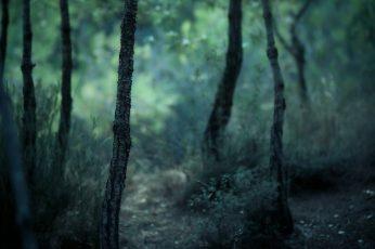 Wallpaper Forest, Dark, Nature