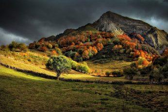Wallpaper Green Leafed Tree, Green Leaf Tree Near Mountain