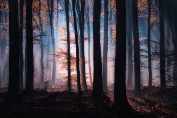 Wallpaper Orange Trees, Silhouette Of Trees During Night