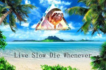 Wallpaper Funny, Humor, Islands, Ocean, Palm, Quotes, Sea