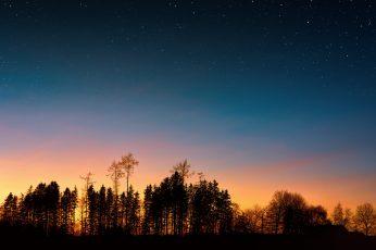 Wallpaper Silhouette Of Trees, Backlit, Dawn, Desktop