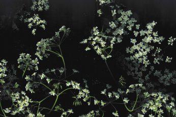 Aesthetic Black Wallpaper, Flower