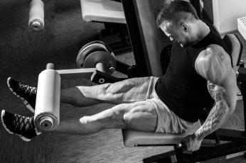 Wallpaper Leg Curler Bench Exerciser, Muscles, Workout, Gym