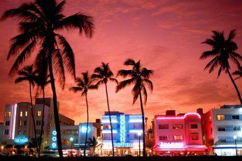 Wallpaper Miami, Street, Neon Lights, Palm Trees, Urban