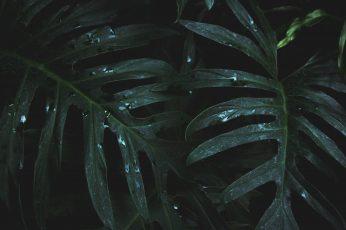 Wallpaper Close Up Photo Of Wet Leaves, 4k Wallpaper