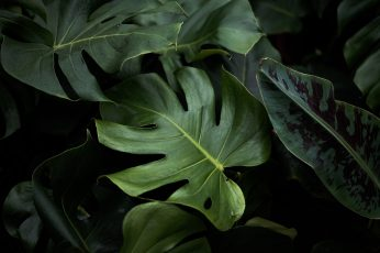 Wallpaper Closeup Photo Of Green Plants, Nature Photographe