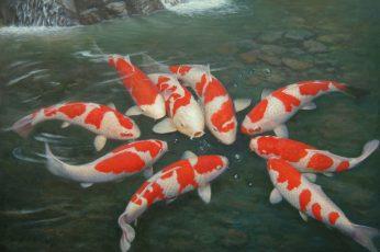 Wallpaper Fishes, Koi
