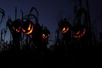 Wallpaper Five Jack O Lanterns During Daytime, Halloween