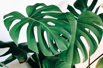Wallpaper Green Leaf Tree, Plant, Veins, Blossom, Flower