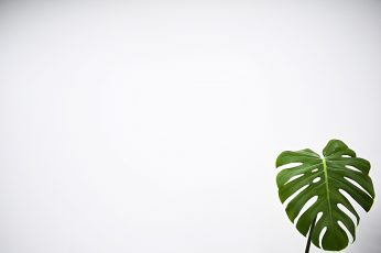 Wallpaper Green Leaf With White Background, Plant, Fern
