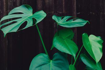 Wallpaper Green Leafed Plant, Green Leafed Plant