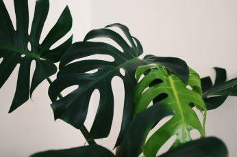 Wallpaper Green Leaves, Green Leafed Plants, Minimal, White