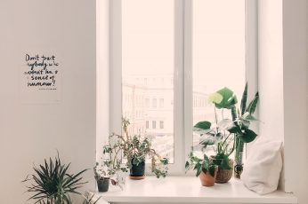 Wallpaper Photo Of Green Leaf Potted Plants On Window