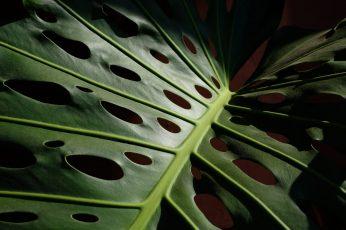 Wallpaper Spain, Estepona, Close Up, Macro, Tropical Plant