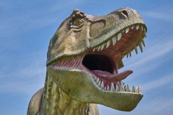 Wallpaper T Rex, Dinosaur, Model, Reptile, Extinct